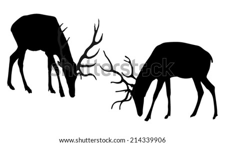 fighting deers vector