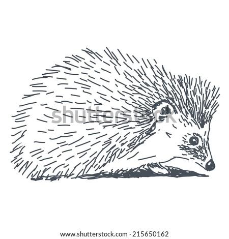 hedgehog sketch drawing