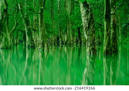trees and reflection in hong