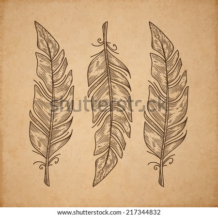 three vector bird feather
