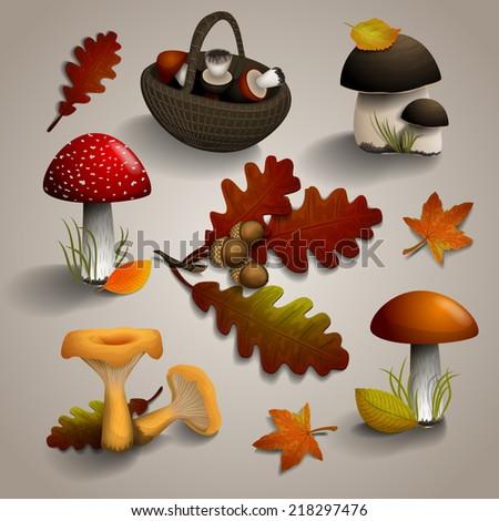 set of autumn mushrooms and oak