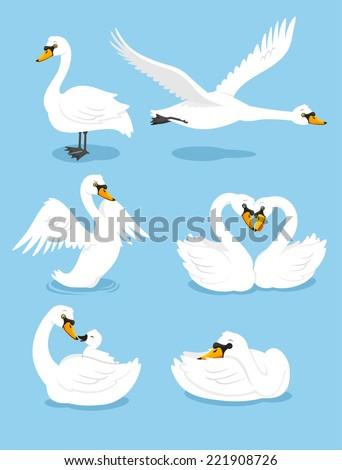 white swan wing water animal