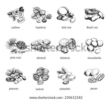 twelve kinds of nuts vector