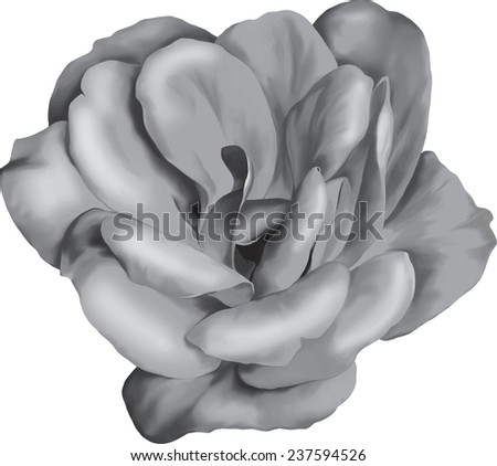 vector black and white rose