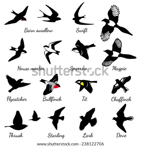 set of black isolated vector