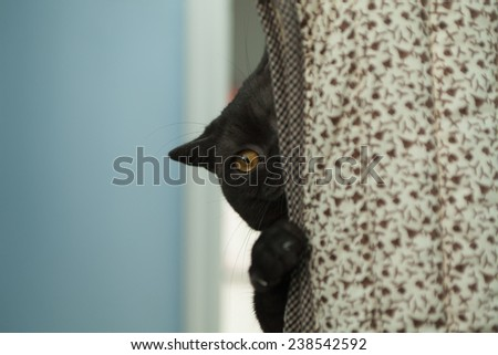 black cat playing hide and seek