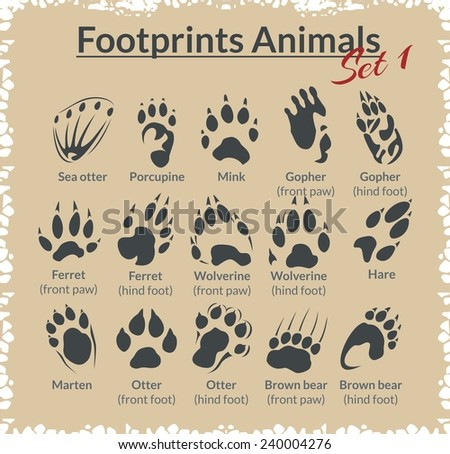 footprints animals   vector set