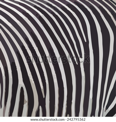 black and white zebra stripes