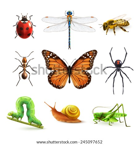 insects realistic colored