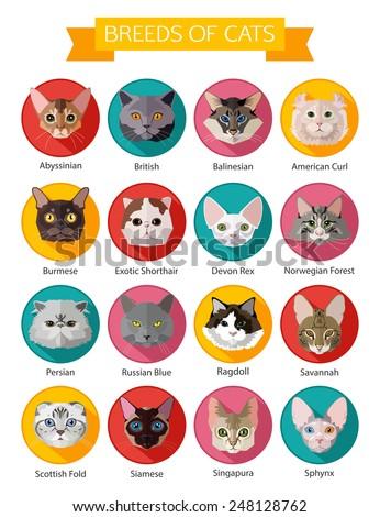 set of flat popular breeds of