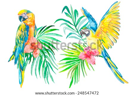 tropical birds isolated on