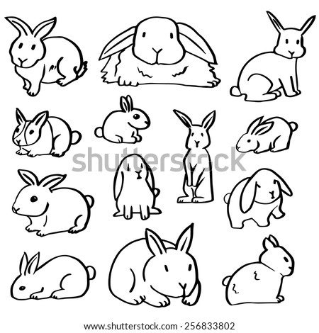 vector set of rabbit
