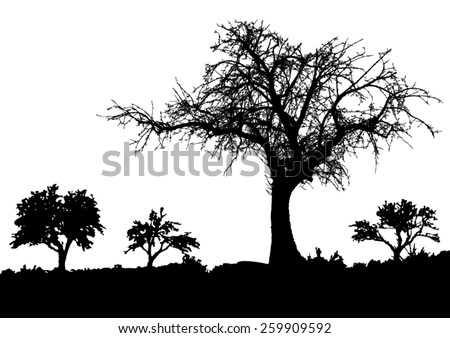 silhouette of tree   bush