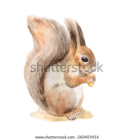 squirrel with a nut hand drawn