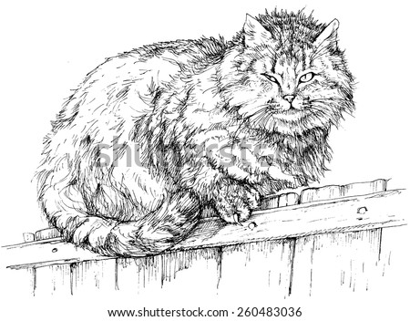 cat on a fence    vector