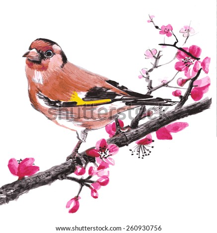 goldfinch bird on a blossom