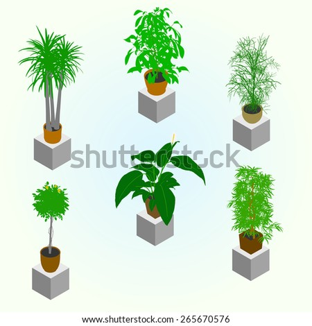planting of greenery for the