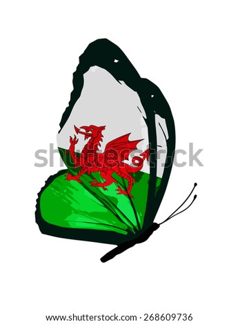 wales flag butterfly   vector