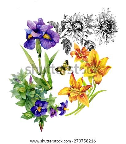 garden lily  iris  african
