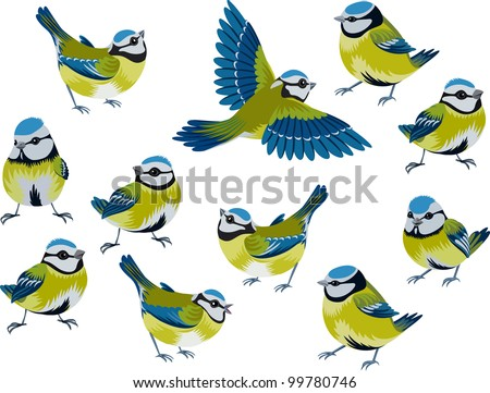 flock of blue tits isolated