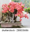 a bonsai of flowers  in pot - stock photo