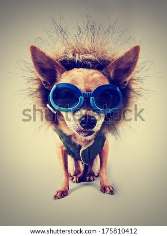 a cute chihuahua with a hoodie and goggles on with an instagram filter applied  - stock photo