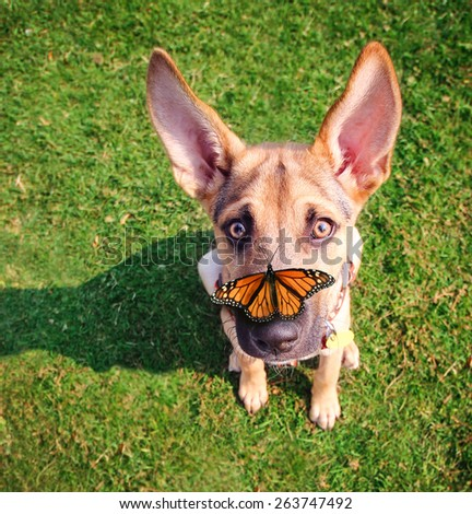 a cute dog in the grass at a park during summer with a butterfly on his or her nose  - stock photo