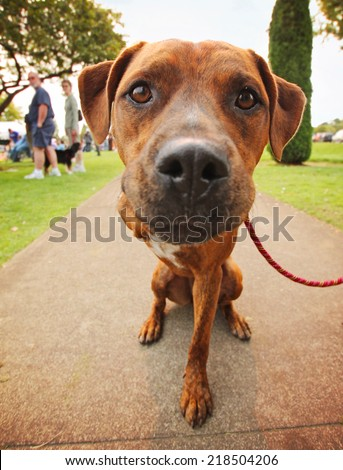 a cute dog in the grass at a park during summer with only three legs - stock photo