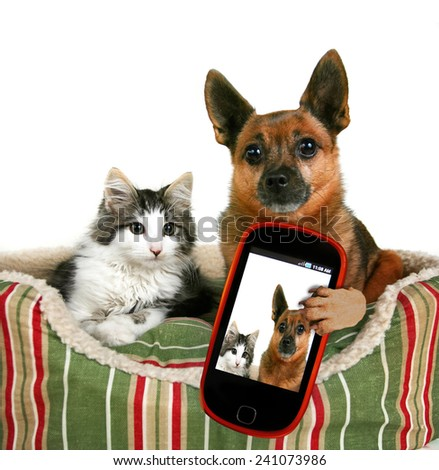 a dog and a kitten in a pet bed taking a selfie together  - stock photo