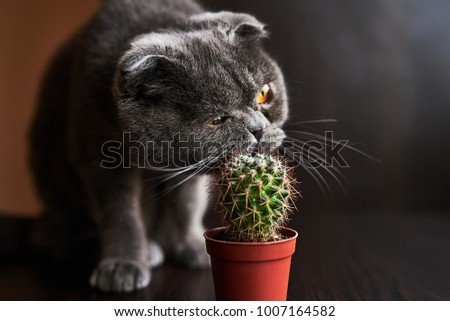 A funny cat tries to eat a cactus