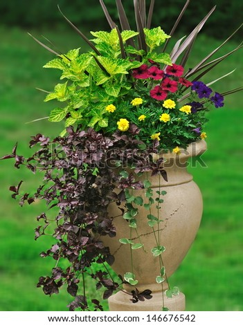 A greek jar garden container featuring an interesting combination of foliage pants, flowers, and trailing vines. - stock photo