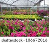 A greenhouse full of flowers. - stock photo