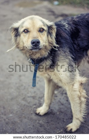 A lonely street dog  - stock photo