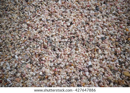 a lot of broken small corals, scrap of sea shell on the sand at prachuapkhirikhan, thailand - stock photo