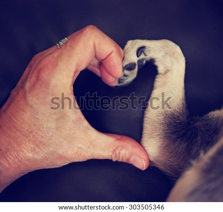 a person and a chihuahua dog making a heart shape with the hand and paw toned with a retro vintage instagram filter effect app or action  - stock photo