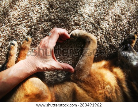 a person and a dog making a heart shape with the hand and paw in natural sunlight with rays of sunshine  - stock photo
