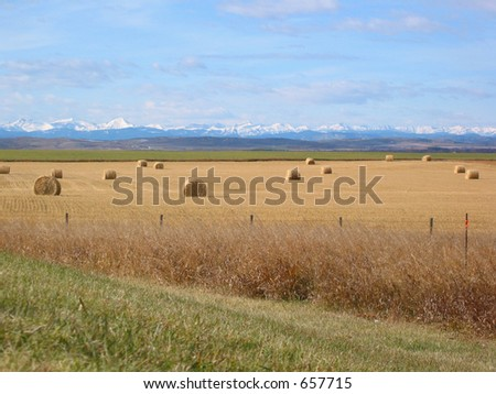 A picture of a field of bales in the Alberta foothills with the Rocky Mountains in the background - stock photo