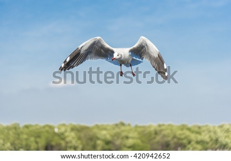 A Seagull flying over the sea spreading wings with blue sky with clouds and green trees nature background. - stock photo