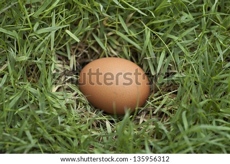 A small clutch of egg in the grass.