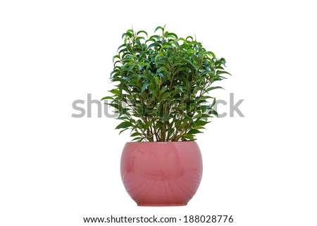 A Small Plant in a Pot Isolated on a White Background - stock photo