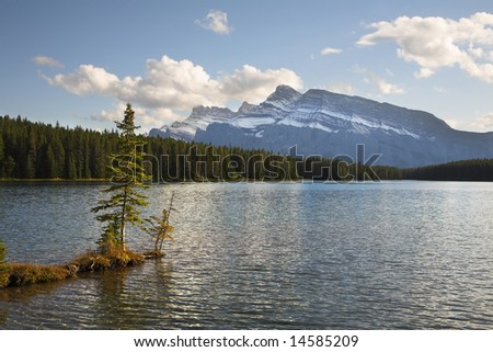 A small tree growing on a shallow of mountain lake in Canada