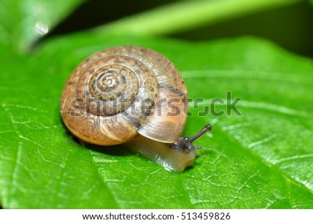 a snail creeps over a leaf