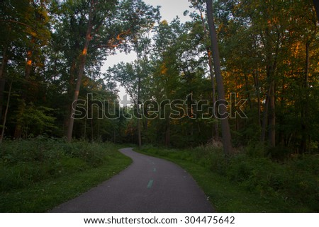 A trail meandering into the distant trees in summer. Golden rays of setting sun illuminate the trees.