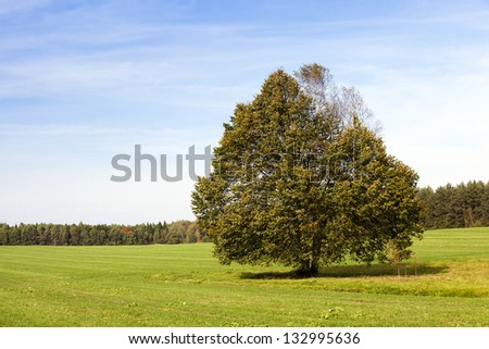 a tree growing in a field in summertime of year - stock photo