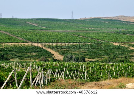 A view of the  wineyards in the Crimea