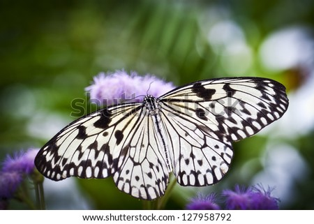 A White Butterfly Wings Wide Open - stock photo