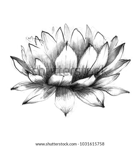 Abstract black and white lotus flower drawn in pencil graphic on paper isolated for modern greeting