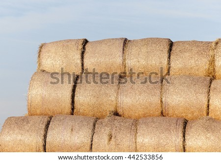 Agricultural field on which were left lying Straw Haystacks after the wheat harvest, grain field, farming and organic foods, autumn season, blue sky - stock photo