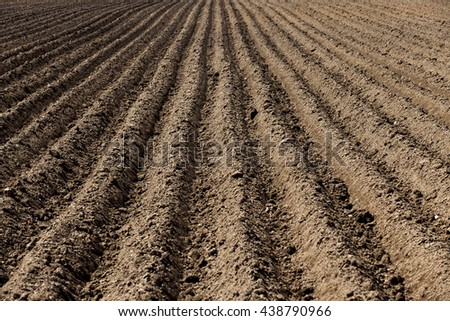 agricultural field that was plowed  for planting potatoes,  Spring,  furrows