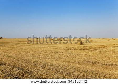 agricultural field where harvest of cereals
